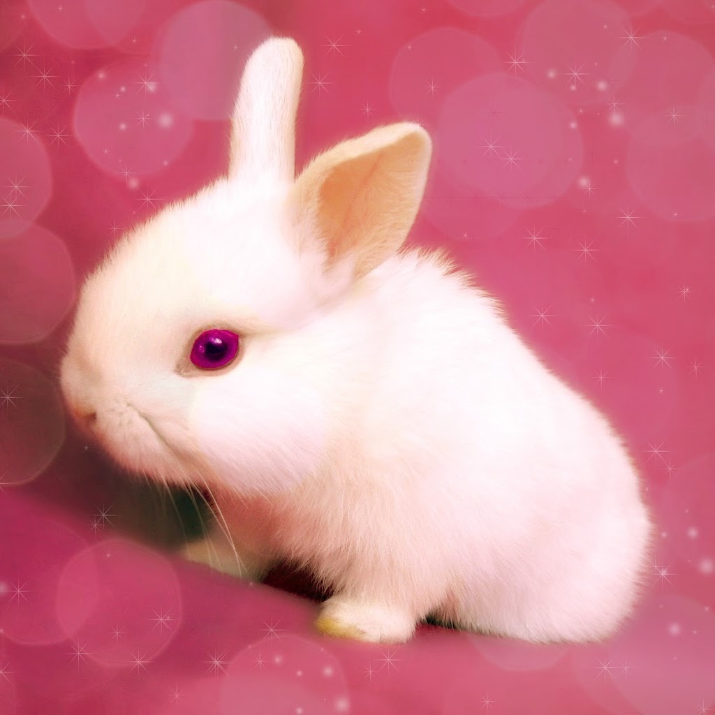 平板ipad(动物类)壁纸 i pad 兔子壁纸   (1/5) 壁纸下载: 1024x1024